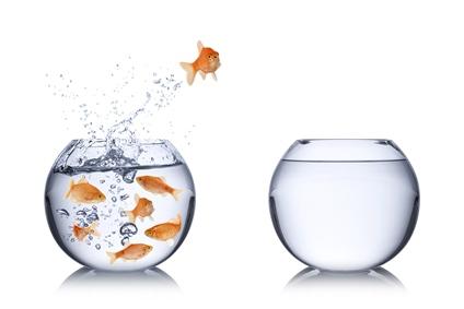 goldfish-jumping-1