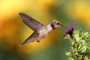How to Please Google in a Post-Hummingbird World