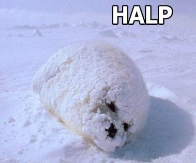 halp-seal