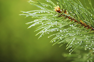 The Blog Your Blog Could Look Like: Data on the Impact of Evergreen Content