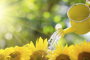 watering-flowers-flower
