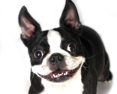 """Are You Letting """"Happy Ears"""" Lead to Sad Sales Results?"""