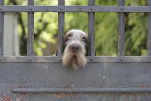 dog-behind-gate