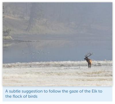elk-example