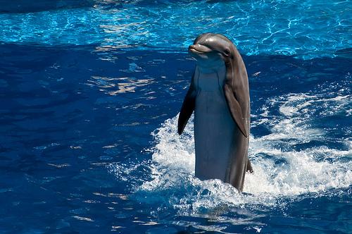 happy-dolphin