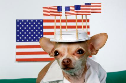 patriotic-chihuahua