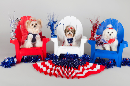 16 Examples of Totally Ridiculous 4th of July Stock Photography
