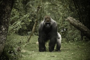 How to Survive When Your 'Gorilla' Client Inevitably Leaves