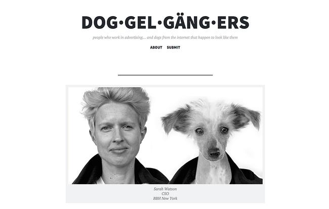 agency-dogs