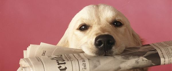 dog-newspaper-695631-edited