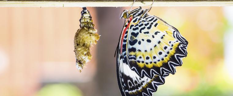 caterpillar_into_butterfly-1