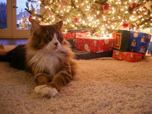 Cozy Christmas Cat