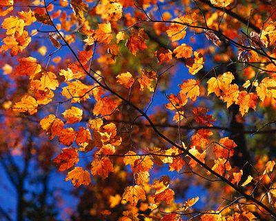 Autumn Leaves by Zest-pk