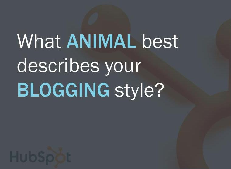 animal blogging