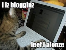 blog cat small