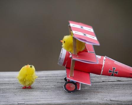 chick landing