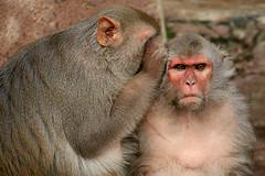 consumer behavior secrets image resized 600