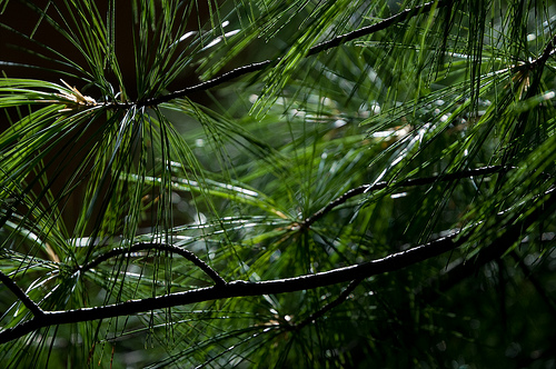 Why Every Business Blog Needs Evergreen Content