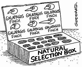 finch natural selection