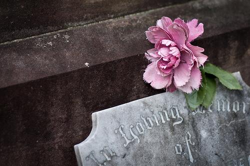 flowers, grave