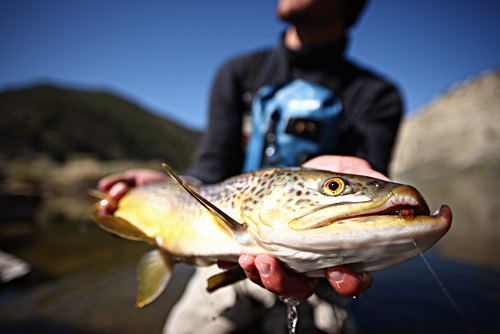 Catch-A-Customer-Fly-Fishing-