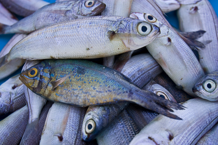 Why Outbound Marketing Is Like Overfishing