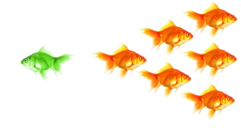 iStock individual goldfish