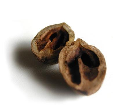 nut shell