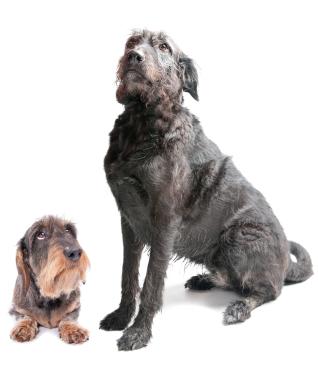 small dog big dog