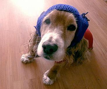 Thinking Cap Dog