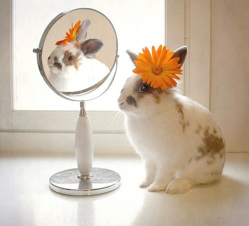 vanity bunny