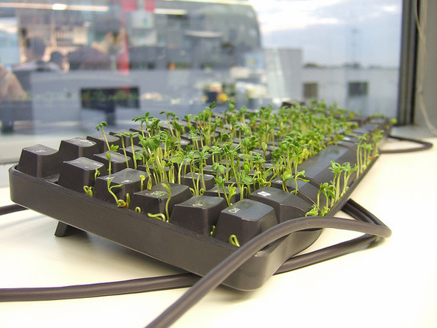 sprouts growing from between keyboard keys