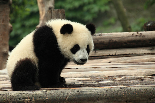 panda update 2013
