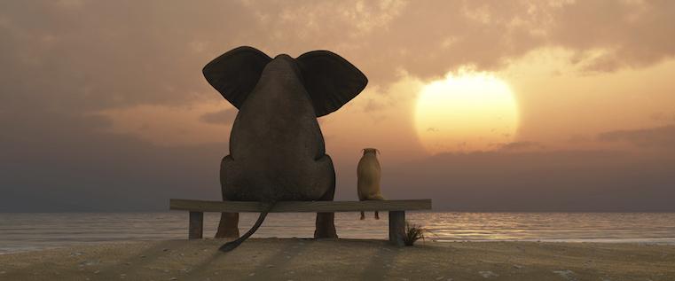 elephant-dog-sunset
