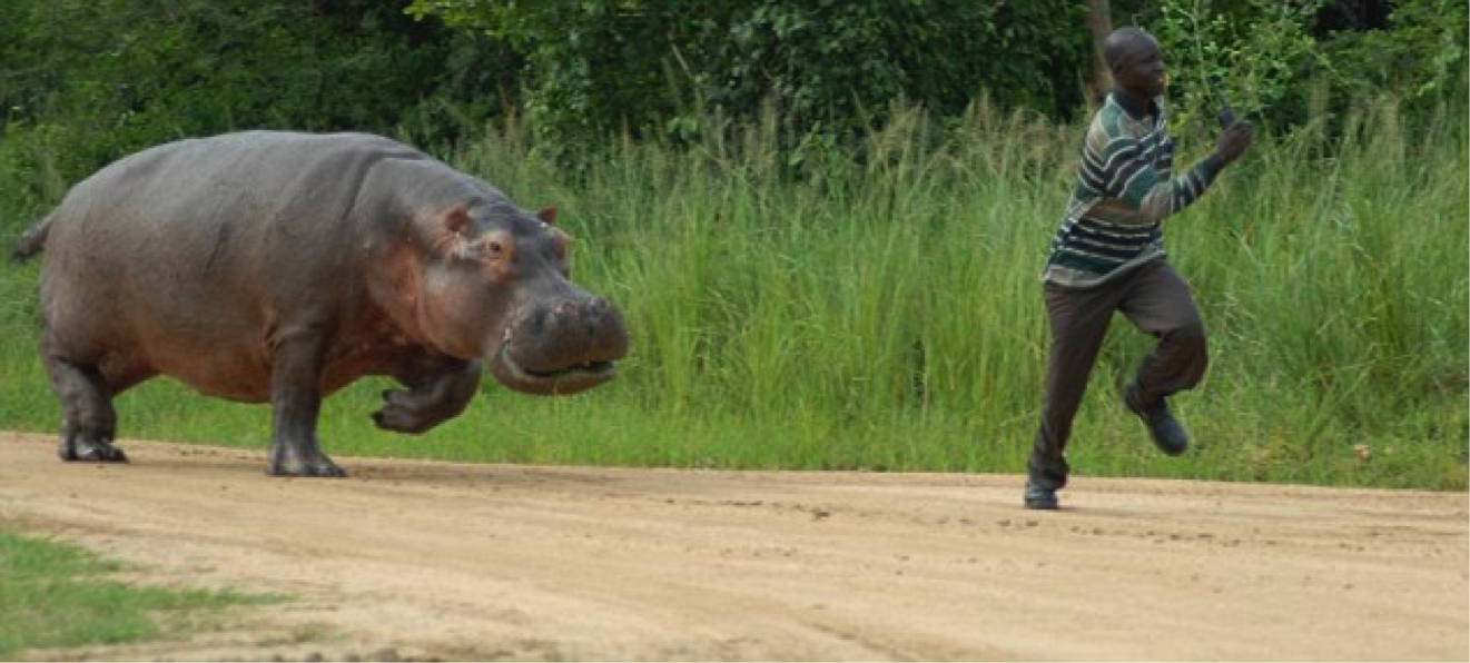chased_by_hippo