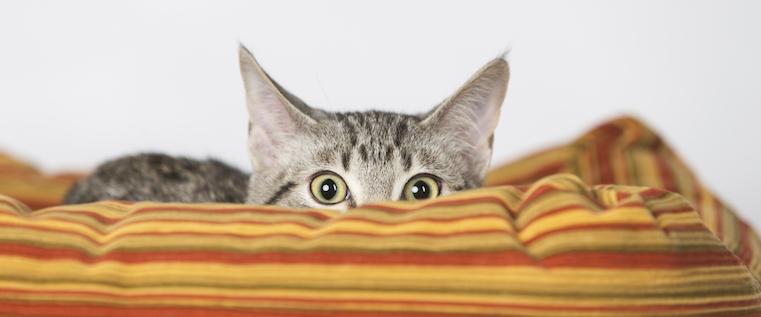 cat-hiding