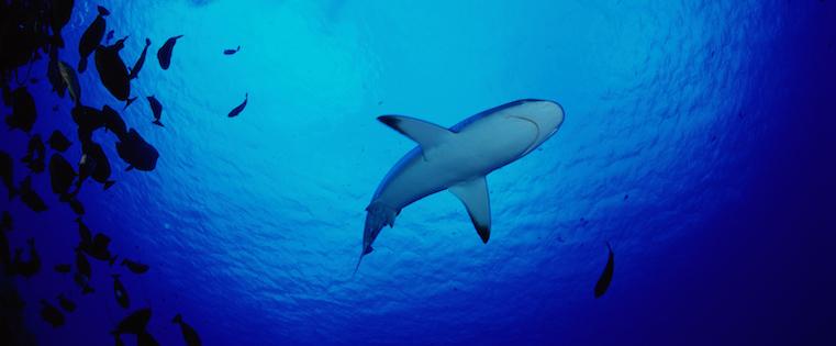 what happens after you get a bid on shark tank?, Modern powerpoint