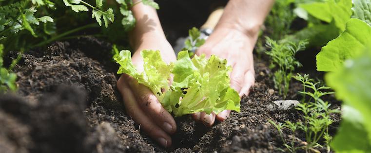 grow-garden