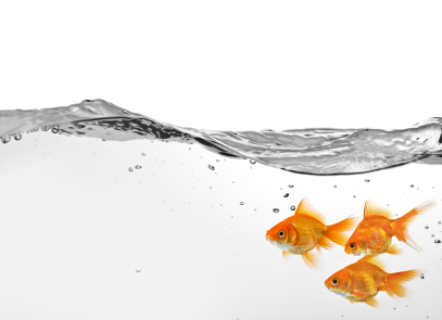 three-goldfish