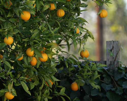 low-hanging-ppc-fruit