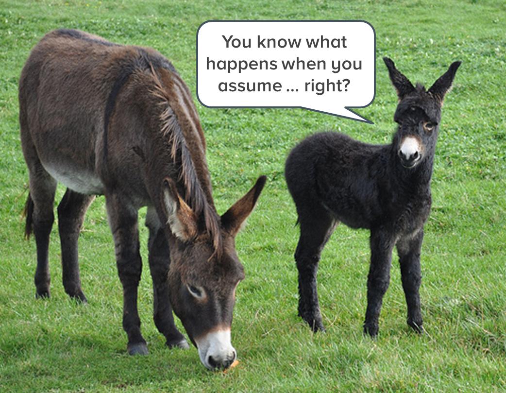 donkeys-who-assume-1