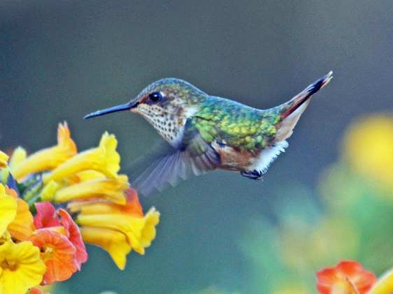 What the New Hummingbird SEO Algorithm Means for Your Ecommerce Business