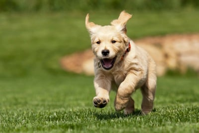 9 Baby Animals Who Are Really Excited That You Closed a Sale