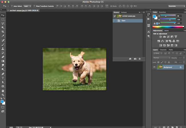 How to crop images in photoshop to specific sizes quick tip 1 open up the image you want to crop were going to use this picture of an a dor able puppy running through a field because why not ccuart Gallery