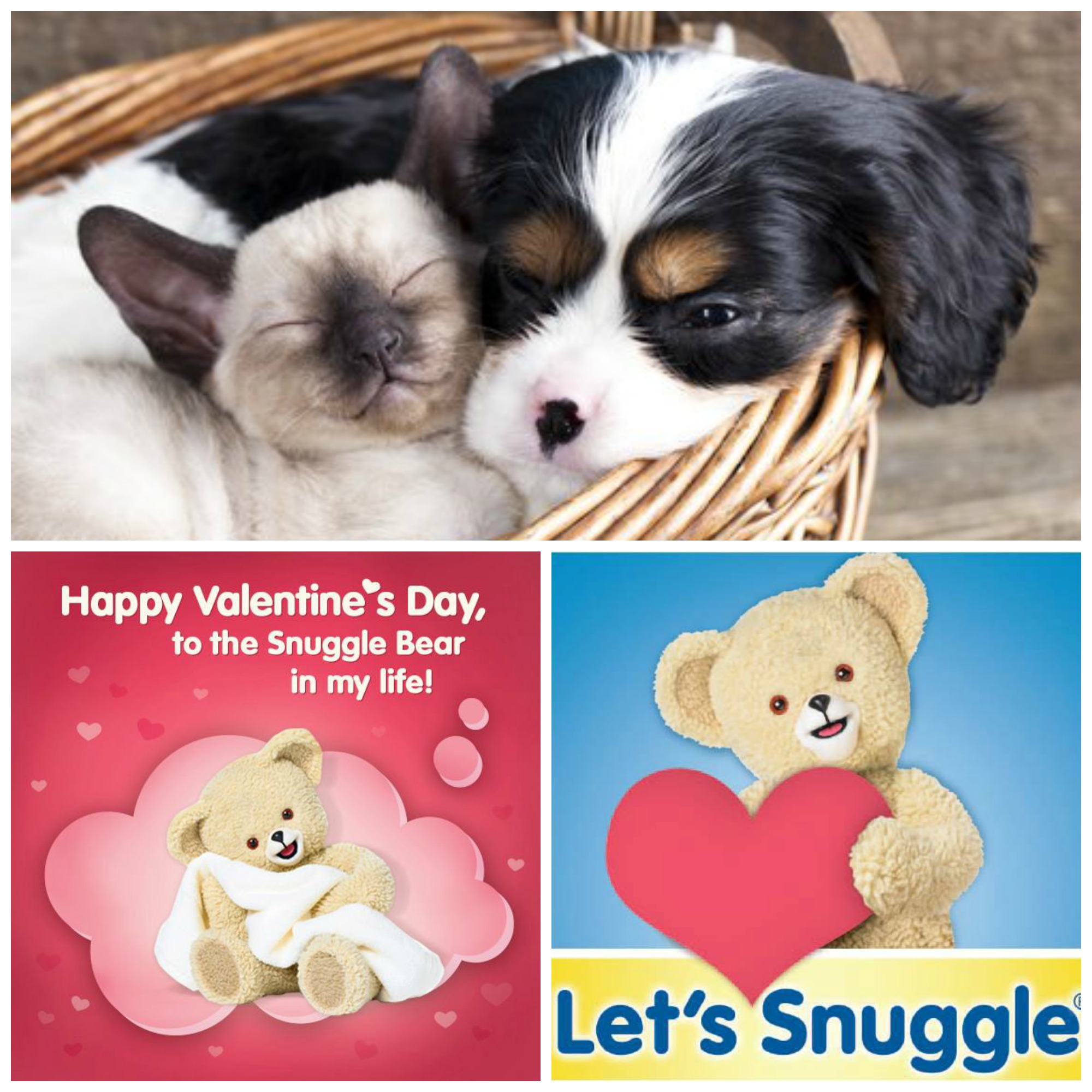 Snuggles_Collage