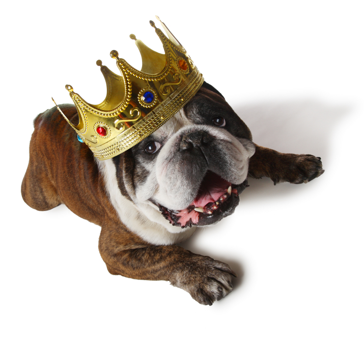 dog_with_crown