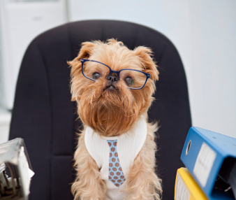 accountant_dog