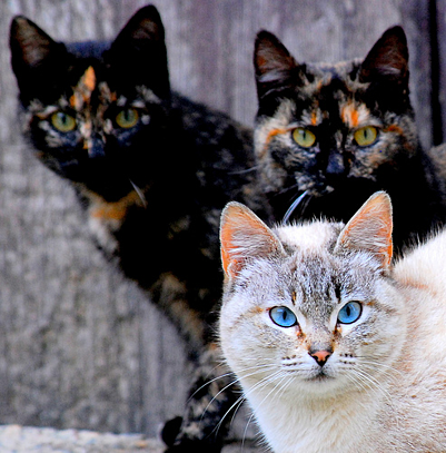 creative commons cats