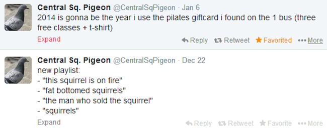 central-sq-pigeon