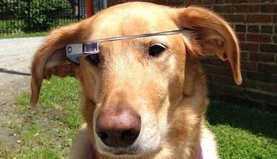 dog-google-glass